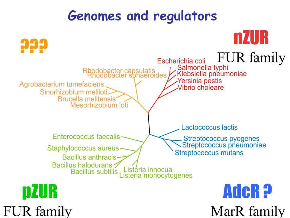 Genomes and regulators nZUR FUR family AdcR MarR family pZUR FUR family