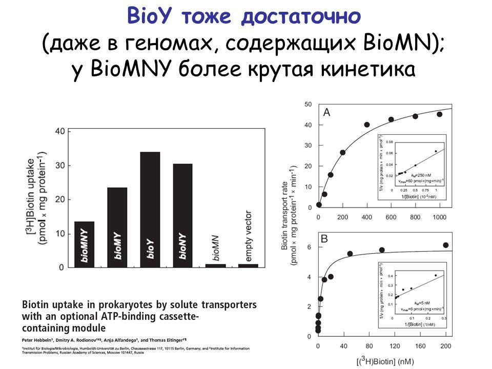 BioY тоже достаточно (даже в геномах, содержащих BioMN); у BioMNY более крутая кинетика