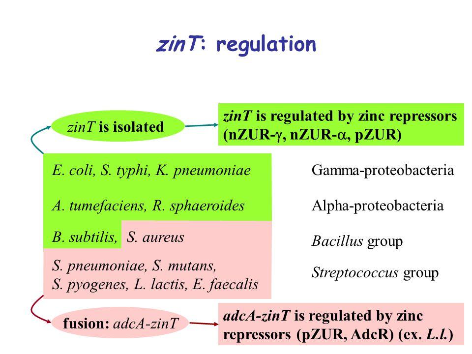 zinT: regulation zinT is isolated fusion: adcA-zinT E.