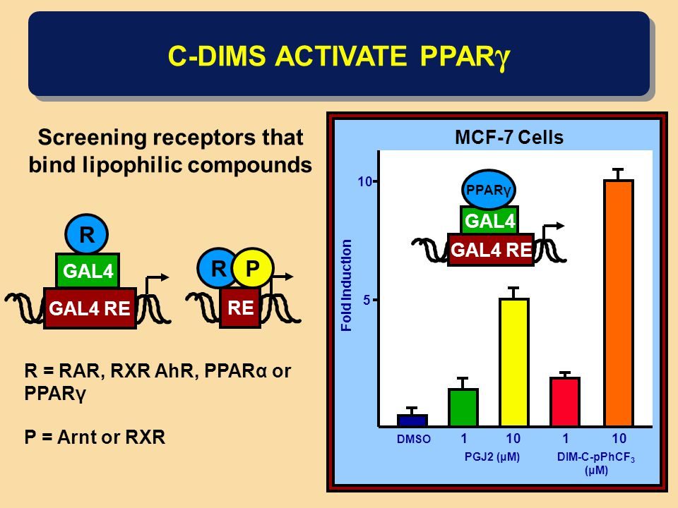 C-DIMS ACTIVATE PPAR γ Screening receptors that bind lipophilic compounds GAL4 R GAL4 RE RE RP R = RAR, RXR AhR, PPARα or PPARγ P = Arnt or RXR 5 10 Fold Induction DMSO PGJ2 (μM)DIM-C-pPhCF 3 (μM) 1101 MCF-7 Cells GAL4 RE PPARγ GAL4