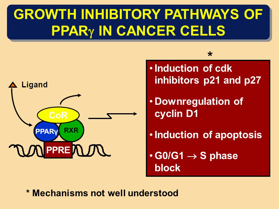 GROWTH INHIBITORY PATHWAYS OF PPAR  IN CANCER CELLS PPARγ PPRE RXR CoR Ligand Induction of cdk inhibitors p21 and p27 Downregulation of cyclin D1 Ind