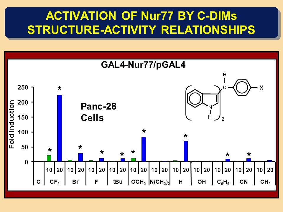 ACTIVATION OF Nur77 BY C-DIMs STRUCTURE-ACTIVITY RELATIONSHIPS * * * * * * * * * * GAL4-Nur77/pGAL4 0 50 100 150 200 250 10201020102010201020102010201020102010201020 CCF 3 BrFtBuOCH 3 N(CH 3 ) 2 HOHC6H5C6H5 CNCH 3 Fold Induction Panc-28 Cells