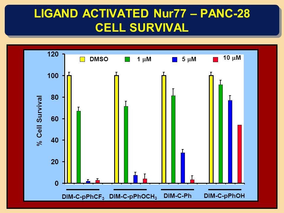 LIGAND ACTIVATED Nur77 – PANC-28 CELL SURVIVAL 1  M 5  M DMSO 10  M DIM-C-pPhCF 3 DIM-C-pPhOCH 3 DIM-C-PhDIM-C-pPhOH 0 20 40 60 80 100 120 % Cell Survival