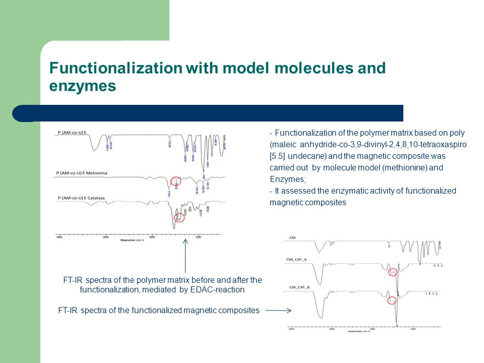 Functionalization with model molecules and enzymes - Functionalization of the polymer matrix based on poly (maleic anhydride-co-3,9-divinyl-2,4,8,10-tetraoxaspiro [5.5] undecane) and the magnetic composite was carried out by molecule model (methionine) and Enzymes; - It assessed the enzymatic activity of functionalized magnetic composites FT-IR spectra of the polymer matrix before and after the functionalization, mediated by EDAC-reaction FT-IR spectra of the functionalized magnetic composites