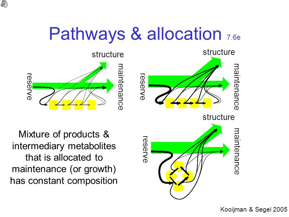 Pathways & allocation 7.6e reserve maintenance structure Mixture of products & intermediary metabolites that is allocated to maintenance (or growth) has constant composition Kooijman & Segel 2005