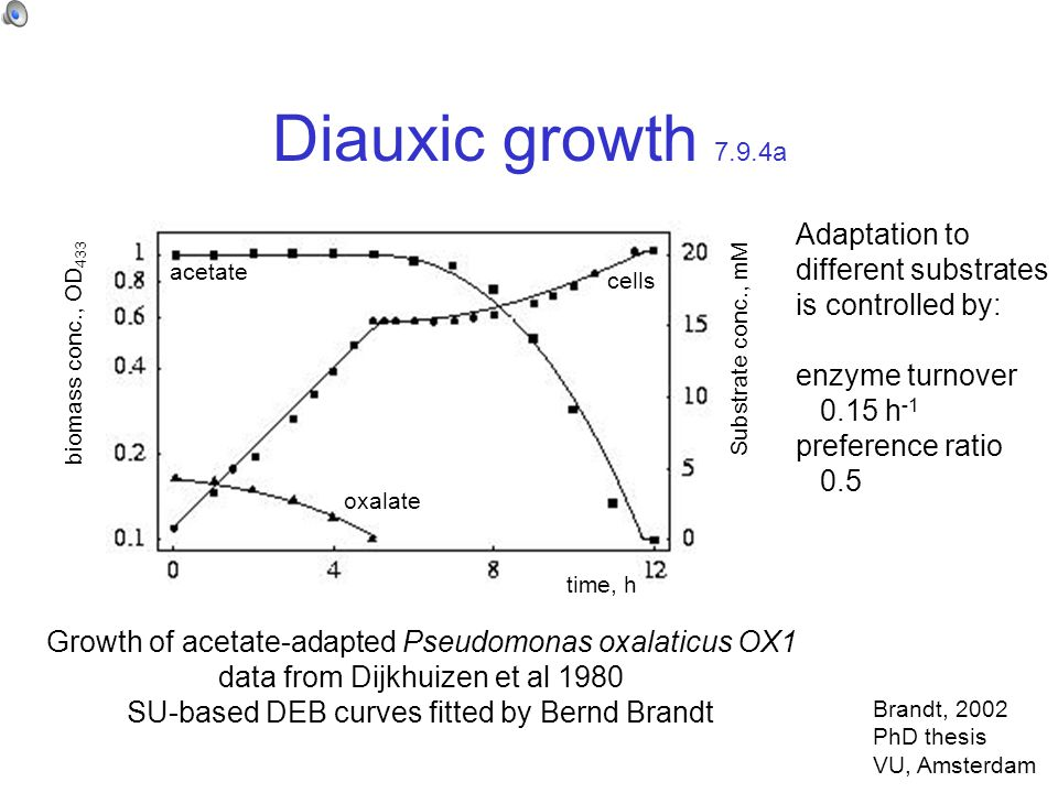 Diauxic growth 7.9.4a time, h biomass conc., OD 433 acetate oxalate Substrate conc., mM Growth of acetate-adapted Pseudomonas oxalaticus OX1 data from Dijkhuizen et al 1980 SU-based DEB curves fitted by Bernd Brandt Adaptation to different substrates is controlled by: enzyme turnover 0.15 h -1 preference ratio 0.5 cells Brandt, 2002 PhD thesis VU, Amsterdam