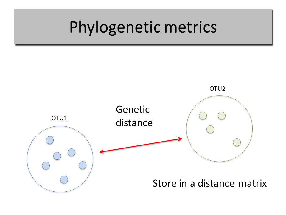 Phylogenetic metrics OTU1 OTU2 Genetic distance Store in a distance matrix