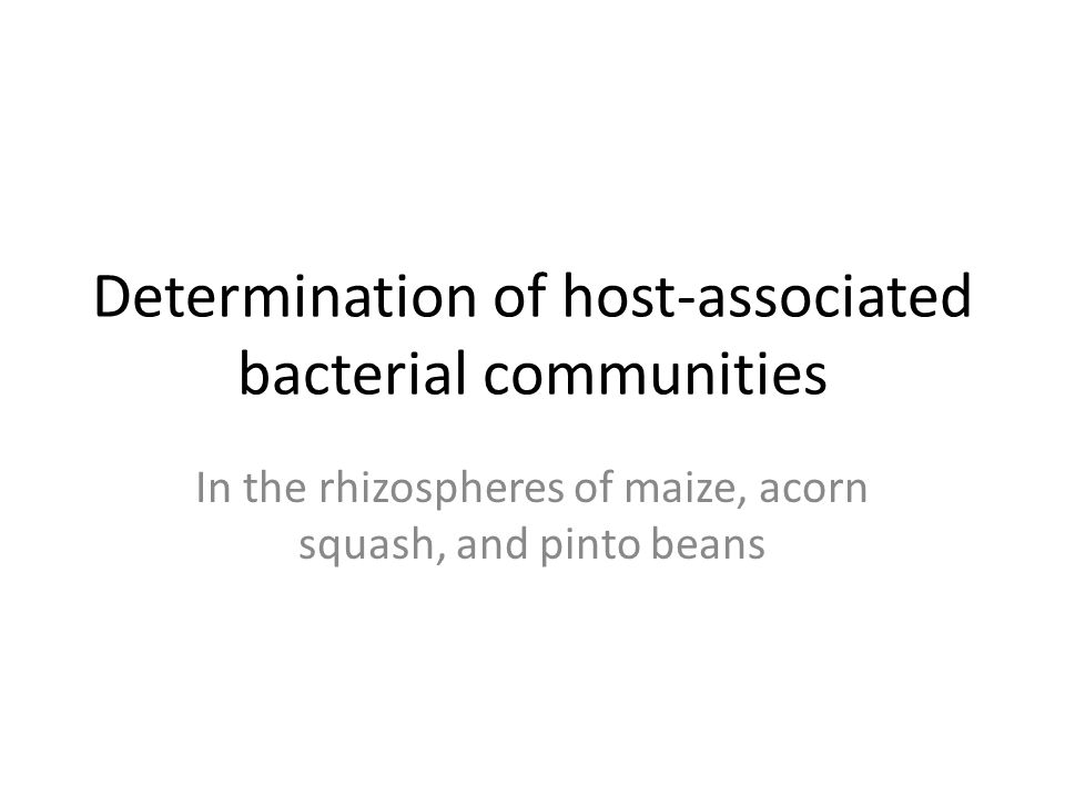 Determination of host-associated bacterial communities In the rhizospheres of maize, acorn squash, and pinto beans