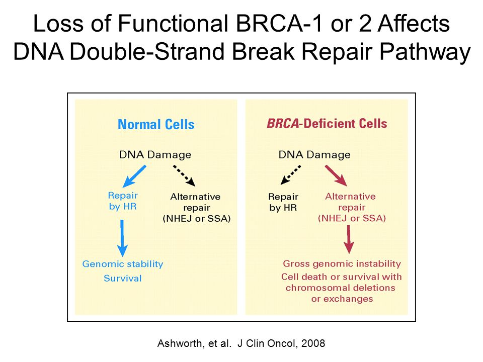 Loss of Functional BRCA-1 or 2 Affects DNA Double-Strand Break Repair Pathway Ashworth, et al. J Clin Oncol, 2008