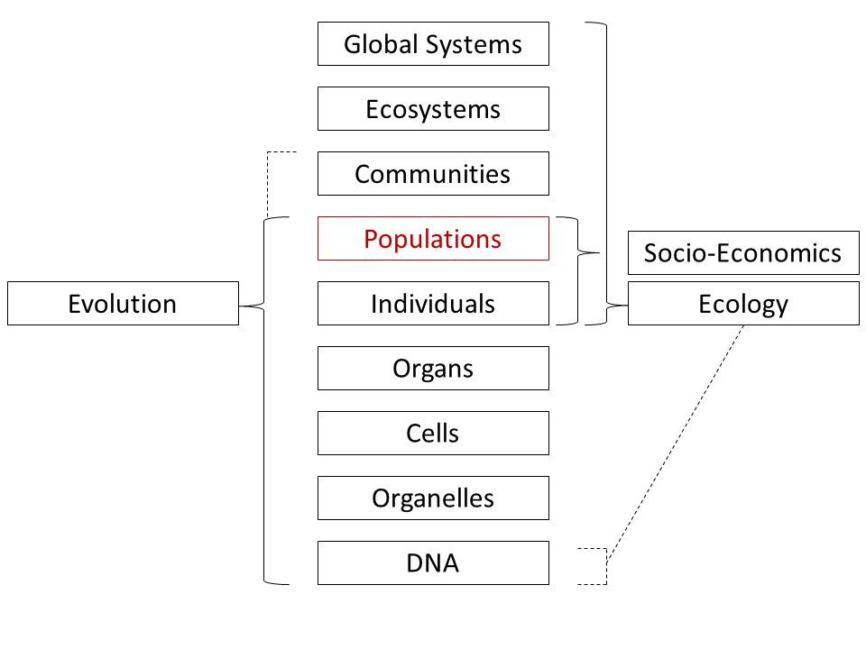 Populations Communities Ecosystems Global Systems Individuals Organs Cells Organelles DNA EvolutionEcology Socio-Economics