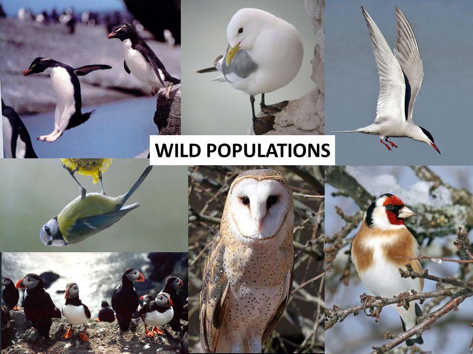 24 WILD POPULATIONS