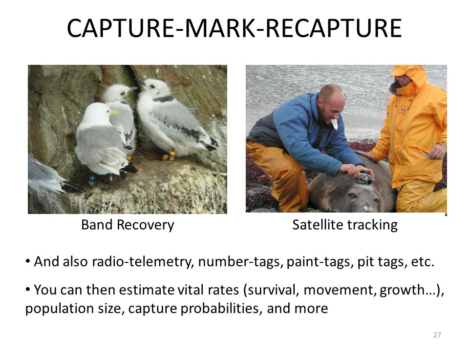 27 CAPTURE-MARK-RECAPTURE Band RecoverySatellite tracking And also radio-telemetry, number-tags, paint-tags, pit tags, etc.