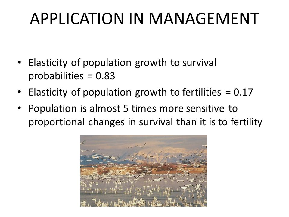 APPLICATION IN MANAGEMENT Elasticity of population growth to survival probabilities = 0.83 Elasticity of population growth to fertilities = 0.17 Population is almost 5 times more sensitive to proportional changes in survival than it is to fertility