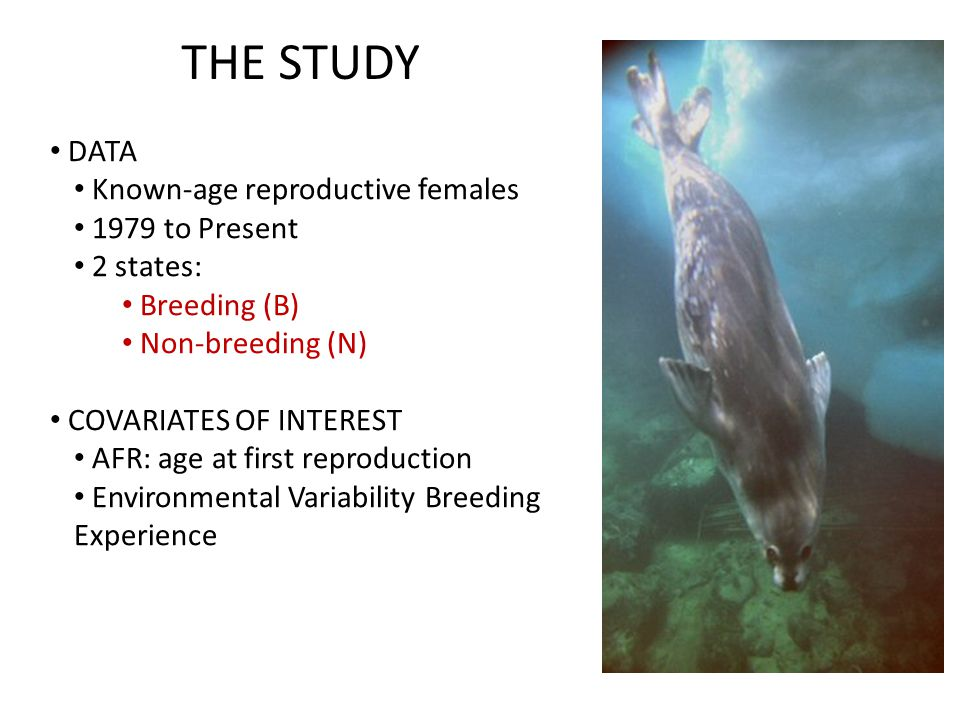DATA Known-age reproductive females 1979 to Present 2 states: Breeding (B) Non-breeding (N) COVARIATES OF INTEREST AFR: age at first reproduction Environmental Variability Breeding Experience THE STUDY