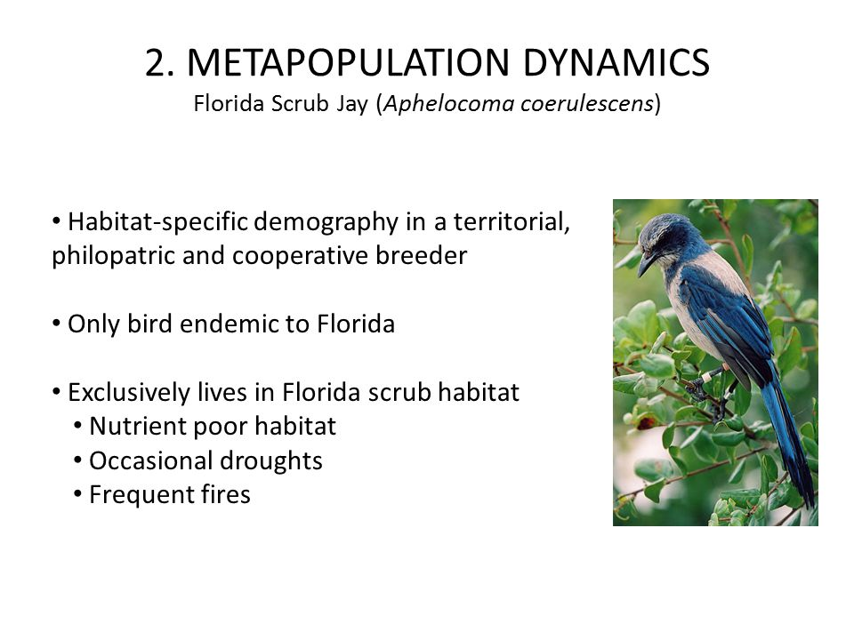Habitat-specific demography in a territorial, philopatric and cooperative breeder Only bird endemic to Florida Exclusively lives in Florida scrub habitat Nutrient poor habitat Occasional droughts Frequent fires 2.