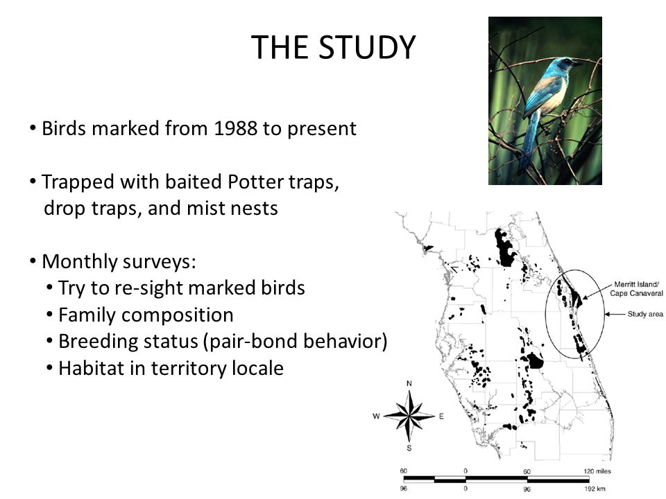 Birds marked from 1988 to present Trapped with baited Potter traps, drop traps, and mist nests Monthly surveys: Try to re-sight marked birds Family co