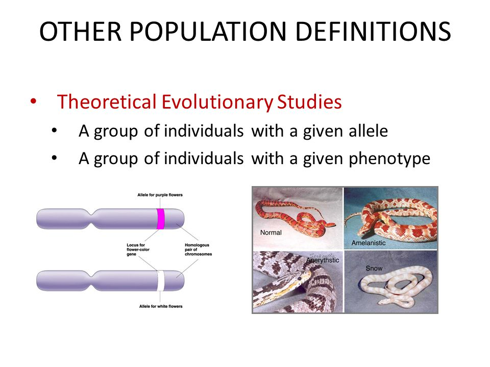 OTHER POPULATION DEFINITIONS Theoretical Evolutionary Studies A group of individuals with a given allele A group of individuals with a given phenotype