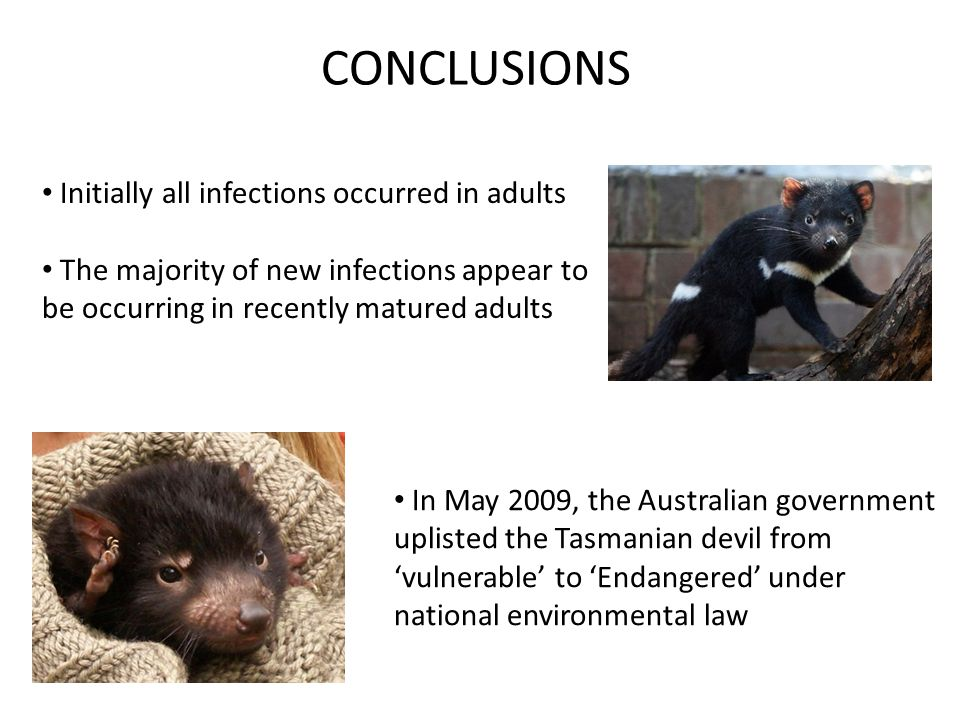 CONCLUSIONS Initially all infections occurred in adults The majority of new infections appear to be occurring in recently matured adults In May 2009, the Australian government uplisted the Tasmanian devil from 'vulnerable' to 'Endangered' under national environmental law
