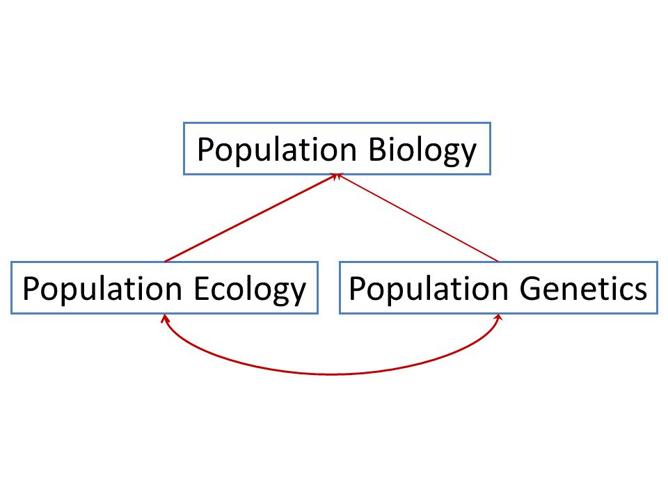 Population Biology Population EcologyPopulation Genetics