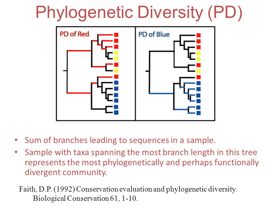 Sum of branches leading to sequences in a sample. Sample with taxa spanning the most branch length in this tree represents the most phylogenetically a