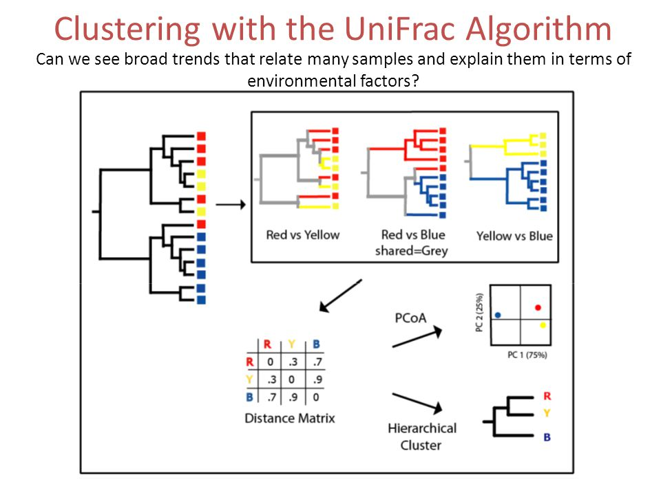 Clustering with the UniFrac Algorithm Can we see broad trends that relate many samples and explain them in terms of environmental factors?