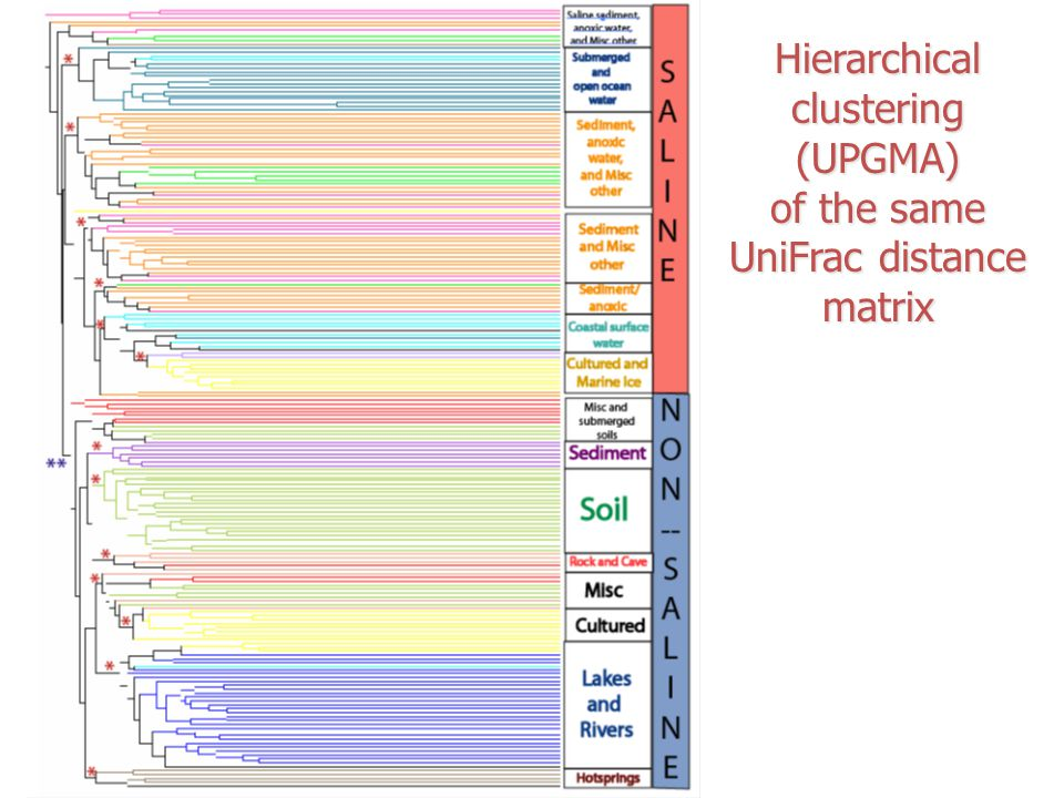 Hierarchical clustering (UPGMA) of the same UniFrac distance matrix