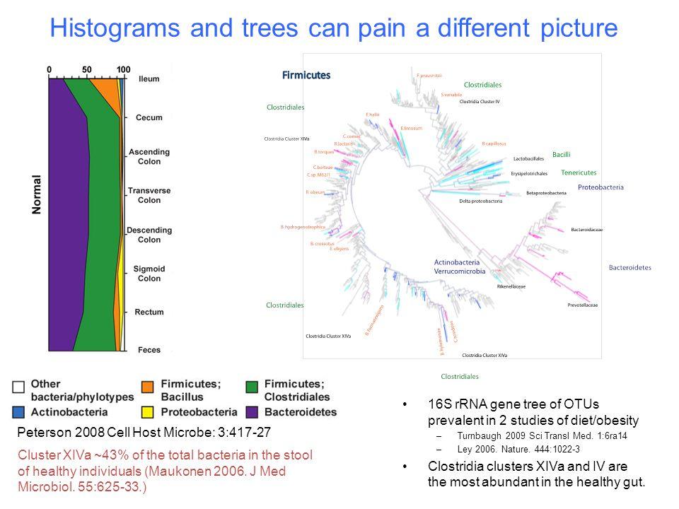 16S rRNA gene tree of OTUs prevalent in 2 studies of diet/obesity –Turnbaugh 2009 Sci Transl Med. 1:6ra14 –Ley 2006. Nature. 444:1022-3 Clostridia clu