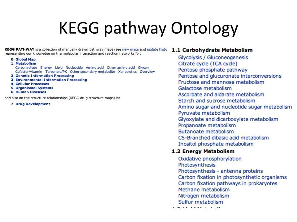 KEGG pathway Ontology