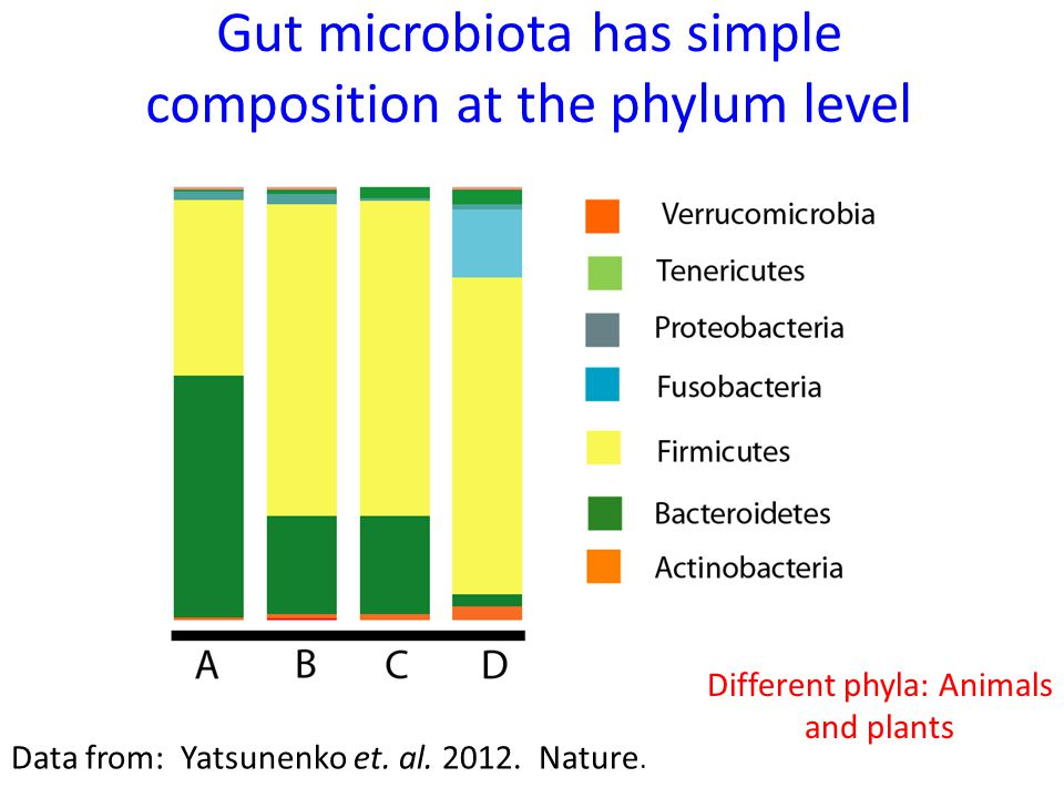 Gut microbiota has simple composition at the phylum level Data from: Yatsunenko et. al. 2012. Nature. Different phyla: Animals and plants