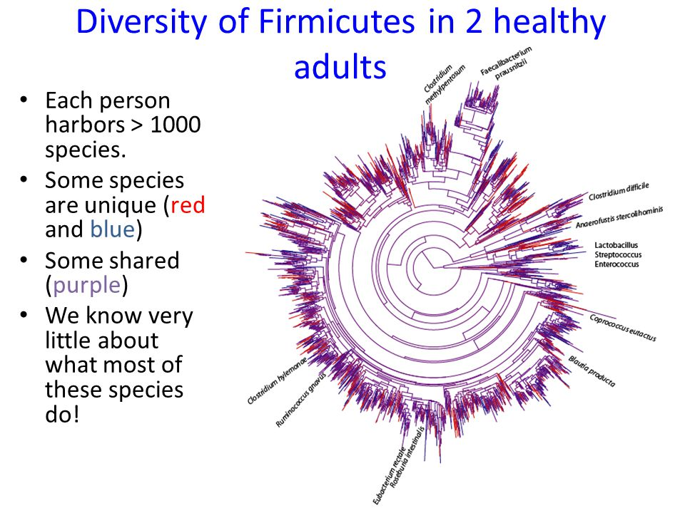 Each person harbors > 1000 species. Some species are unique (red and blue) Some shared (purple) We know very little about what most of these species d