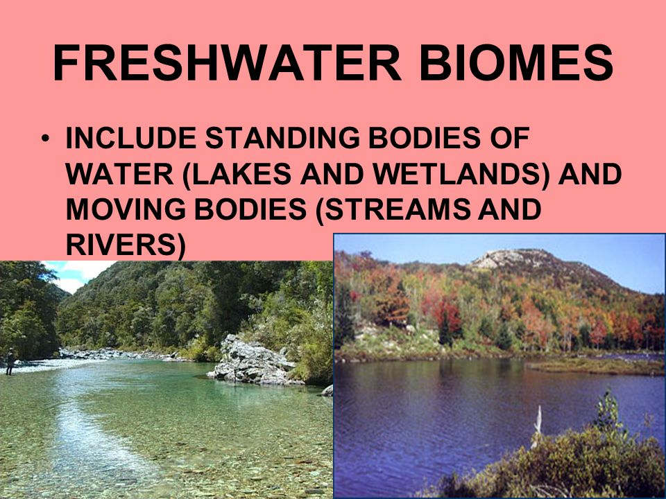 FRESHWATER BIOMES INCLUDE STANDING BODIES OF WATER (LAKES AND WETLANDS) AND MOVING BODIES (STREAMS AND RIVERS)