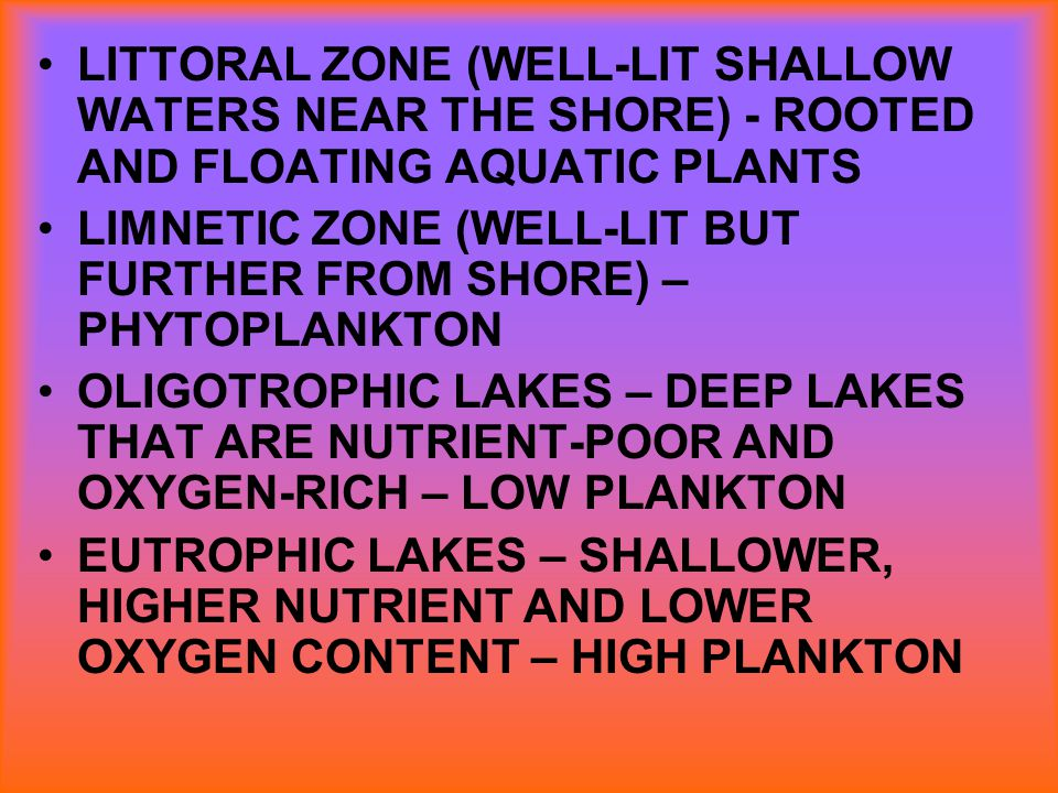 LITTORAL ZONE (WELL-LIT SHALLOW WATERS NEAR THE SHORE) - ROOTED AND FLOATING AQUATIC PLANTS LIMNETIC ZONE (WELL-LIT BUT FURTHER FROM SHORE) – PHYTOPLA