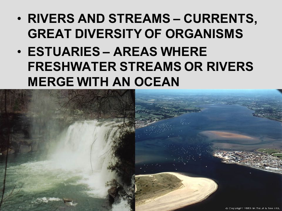 RIVERS AND STREAMS – CURRENTS, GREAT DIVERSITY OF ORGANISMS ESTUARIES – AREAS WHERE FRESHWATER STREAMS OR RIVERS MERGE WITH AN OCEAN