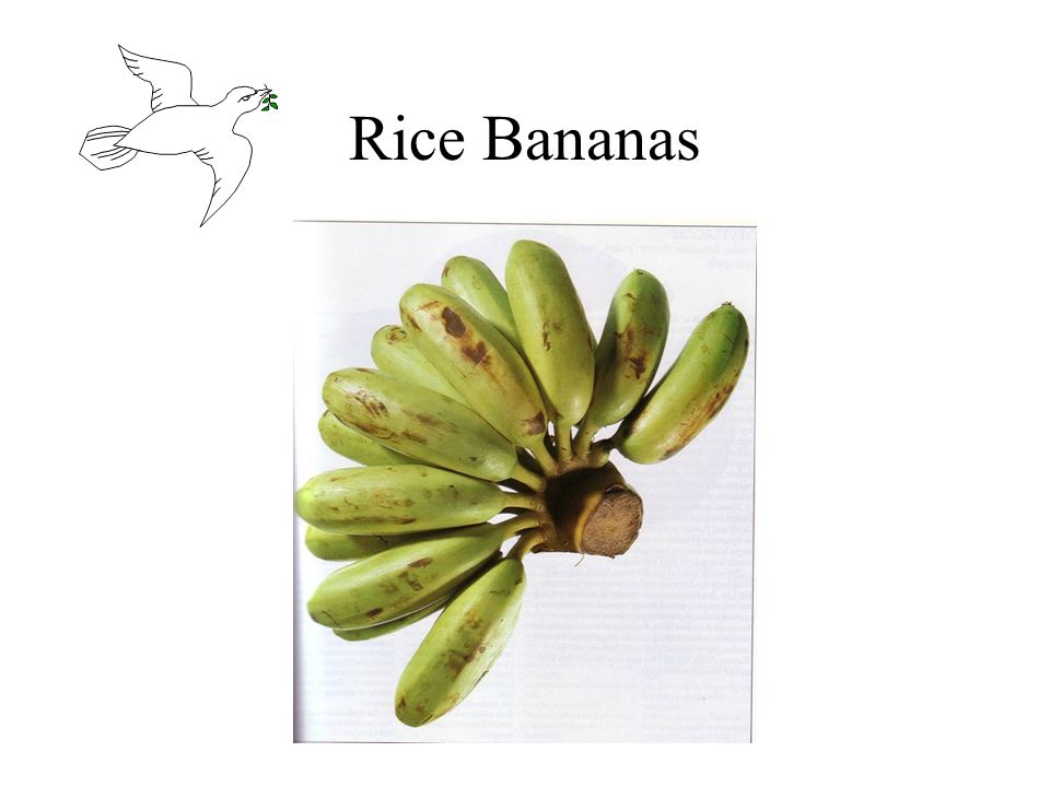Rice Bananas