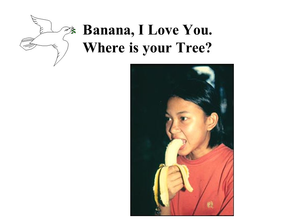 Banana, I Love You. Where is your Tree