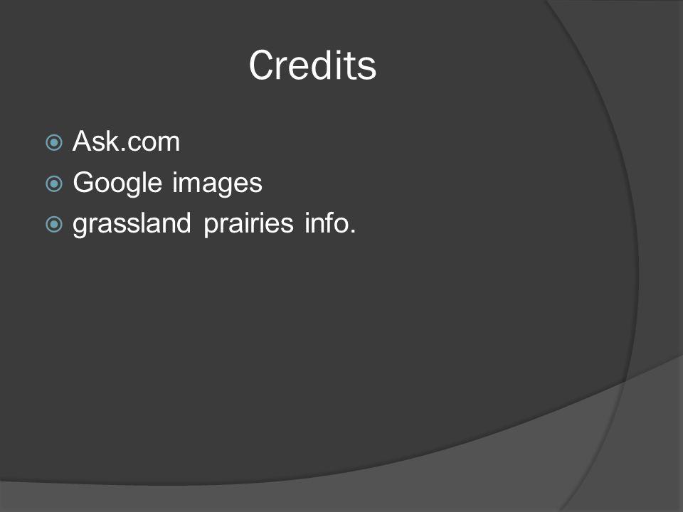 Credits  Ask.com  Google images  grassland prairies info.
