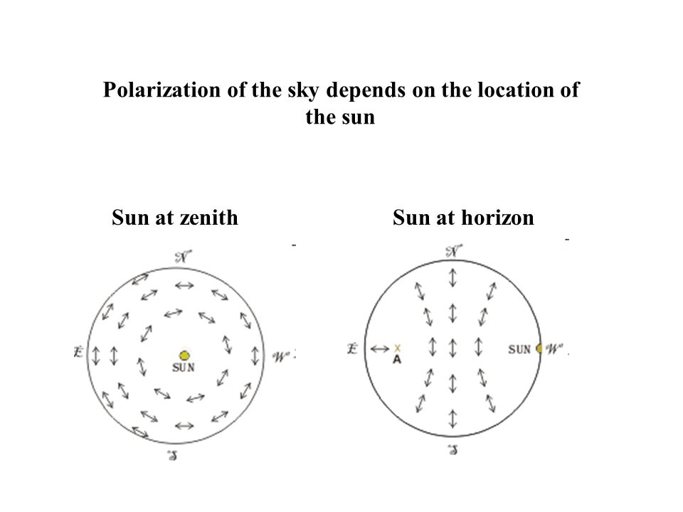 Polarization of the sky depends on the location of the sun Sun at zenithSun at horizon