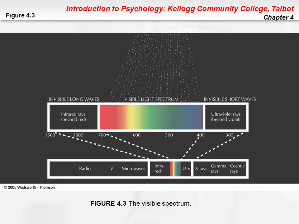 Introduction to Psychology: Kellogg Community College, Talbot Chapter 4 Hearing Sound Waves: Rhythmic movement of air molecules Pitch/ Frequency: Higher or lower tone of a sound Loudness/ Amplitude: Sound intensity