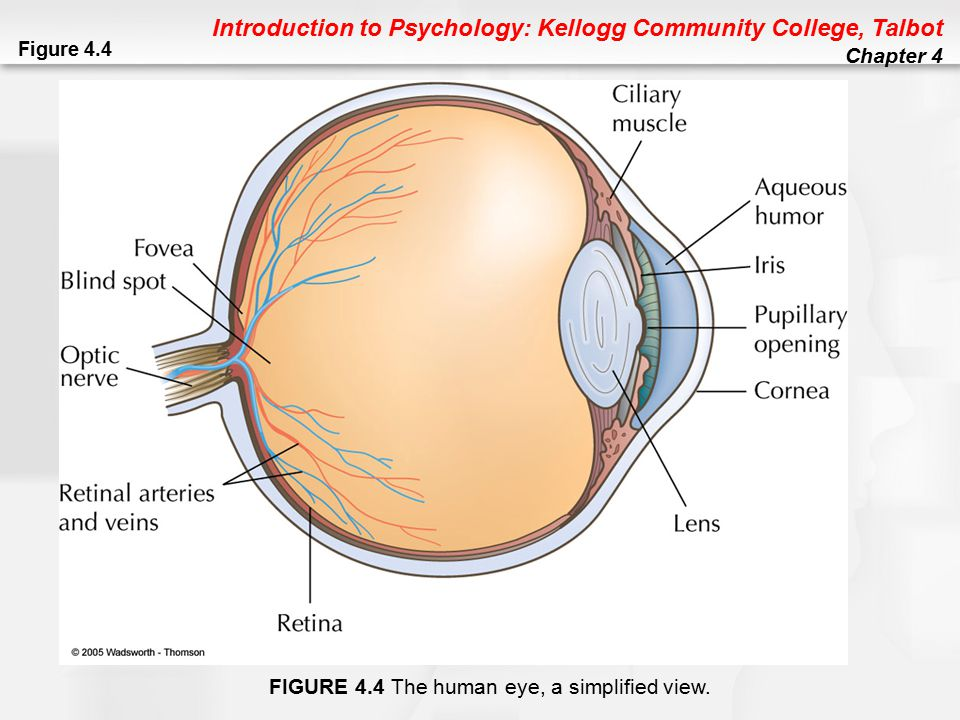 Introduction to Psychology: Kellogg Community College, Talbot Chapter 4 Vision Problems Hyperopia: Difficulty focusing nearby objects (farsightedness) Myopia: Difficulty focusing distant objects (nearsightedness) Astigmatism: Corneal, lens, or eye defect that causes some areas of vision to be out of focus; relatively common Presbyopia: Farsightedness caused by aging