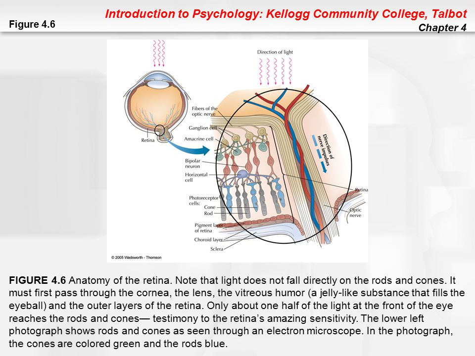 Introduction to Psychology: Kellogg Community College, Talbot Chapter 4 Figure 4.20 FIGURE 4.20 The loudness of sound is measured in decibels.