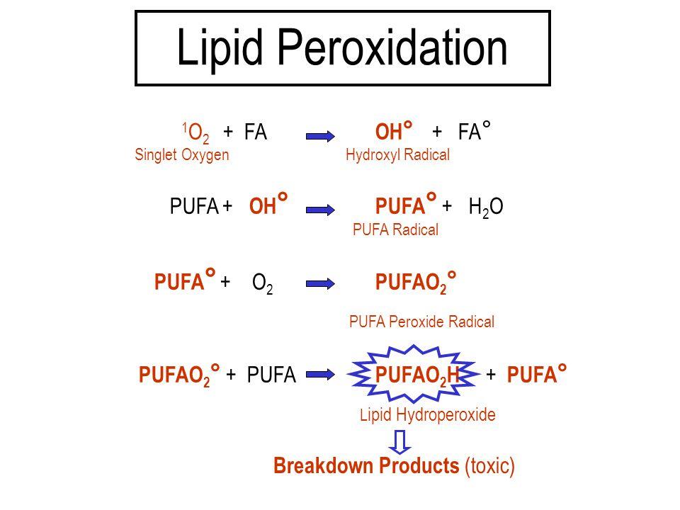 1 O 2 + FA OH ° + FA ° Singlet Oxygen Hydroxyl Radical PUFA + OH ° PUFA ° + H 2 O PUFA Radical PUFA ° + O 2 PUFAO 2 ° PUFA Peroxide Radical PUFAO 2 °