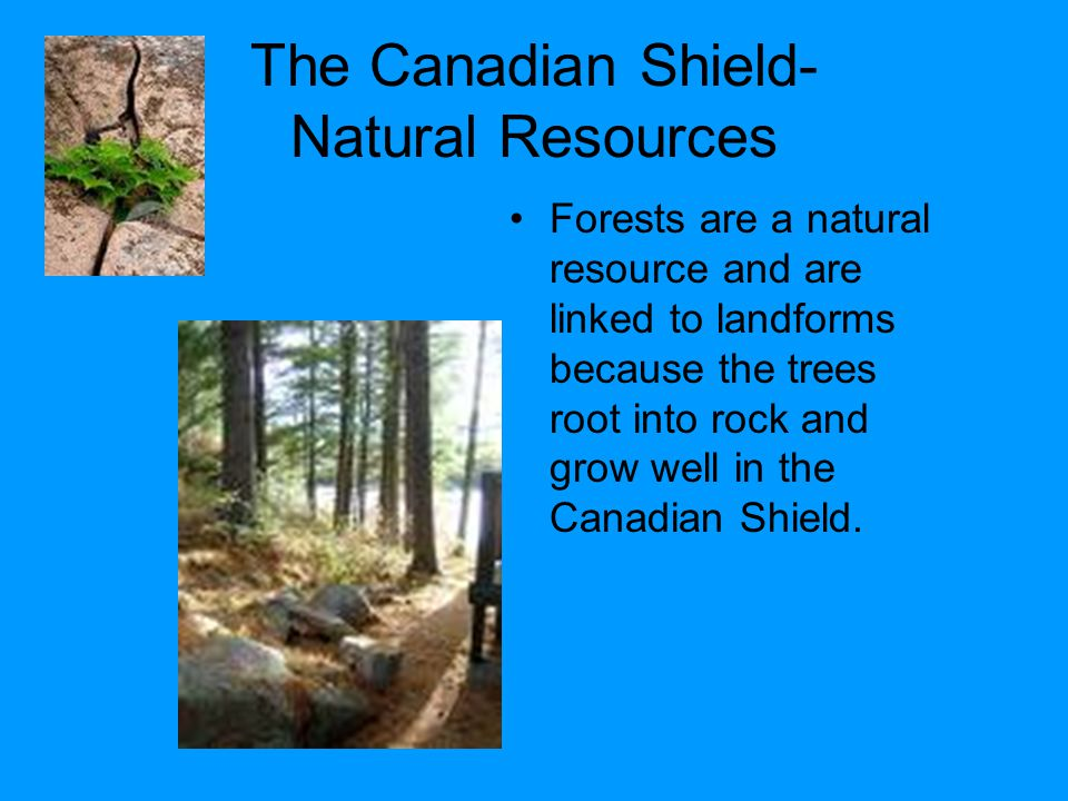 The Canadian Shield- Natural Resources Forests are a natural resource and are linked to landforms because the trees root into rock and grow well in the Canadian Shield.