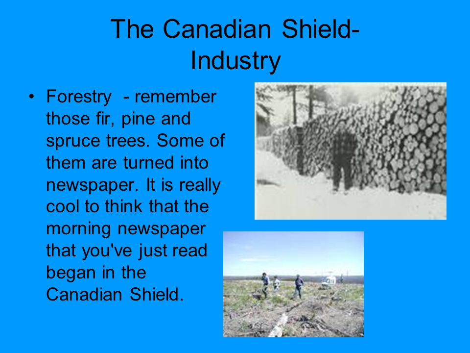 The Canadian Shield- Industry Forestry - remember those fir, pine and spruce trees.