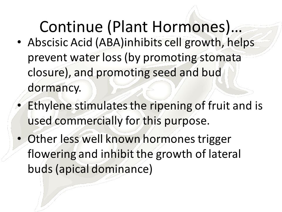 Continue (Plant Hormones)… Abscisic Acid (ABA)inhibits cell growth, helps prevent water loss (by promoting stomata closure), and promoting seed and bu