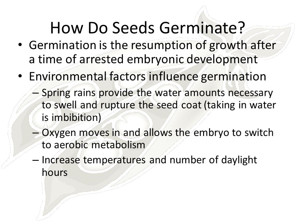 How Do Seeds Germinate? Germination is the resumption of growth after a time of arrested embryonic development Environmental factors influence germina