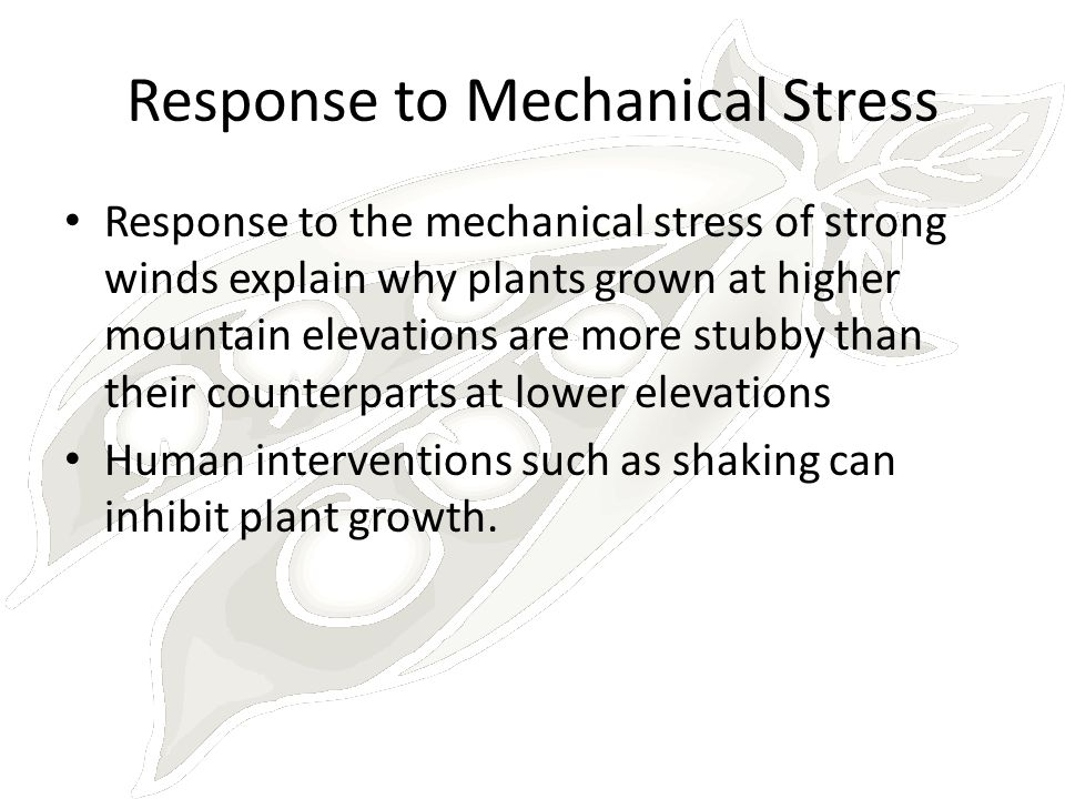 Response to Mechanical Stress Response to the mechanical stress of strong winds explain why plants grown at higher mountain elevations are more stubby