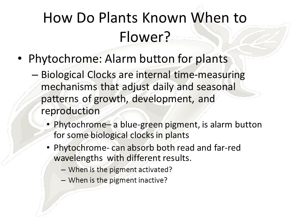 How Do Plants Known When to Flower? Phytochrome: Alarm button for plants – Biological Clocks are internal time-measuring mechanisms that adjust daily