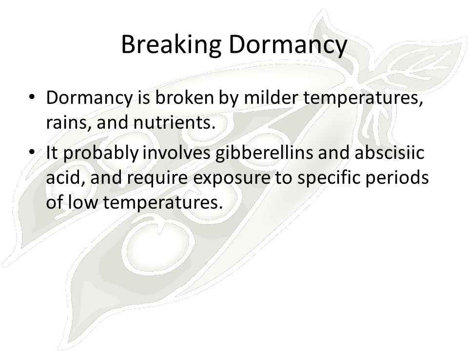 Breaking Dormancy Dormancy is broken by milder temperatures, rains, and nutrients. It probably involves gibberellins and abscisiic acid, and require e