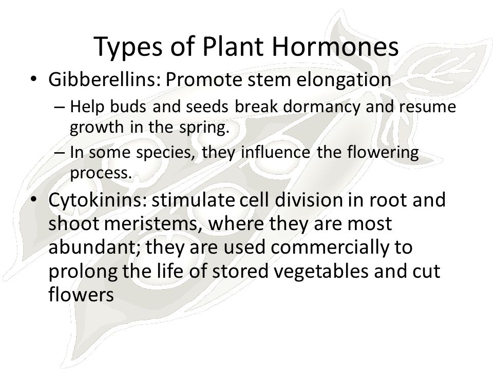 Types of Plant Hormones Gibberellins: Promote stem elongation – Help buds and seeds break dormancy and resume growth in the spring. – In some species,