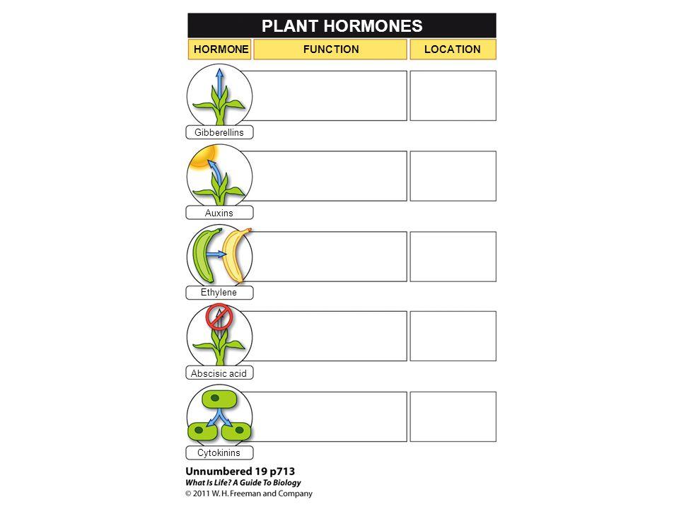 PLANT HORMONES HORMONEFUNCTIONLOCATION Gibberellins Auxins Ethylene Abscisic acid Cytokinins